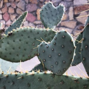 cactus in the shape of a heart